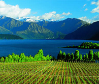 Escorted Group Tours in New Zealand