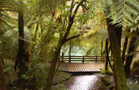 Beautiful New Zealand Forest