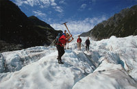 Fox Glacier Guided Tour